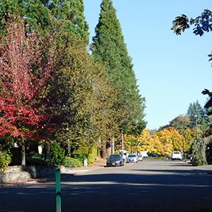 Fall Home Street