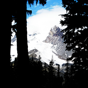 Mt Hood through the trees